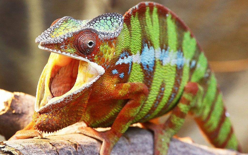 Teen Lizard Skin